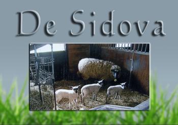 De Sidova